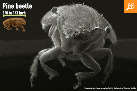 DYK_4_4bettle_07.jpg